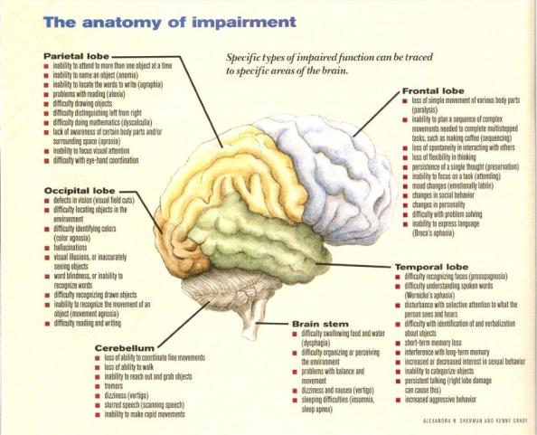 anatomy-of-impairment0001